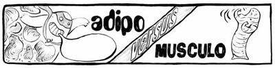 adipo_1.jpg