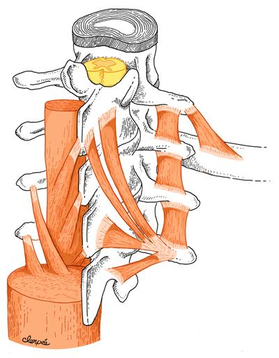 vertebre.jpg